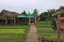 베트남 【 다낭 / 호이안 】 에코투어