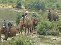 코끼리와 함께하는 데이투어 (당일)