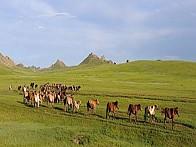 【 몽 골 】 다양한 현지 유목민 체험 및 탐방 ( 산악 승마, 유목민 게르 숙박 등 )  《 4박 5일 》